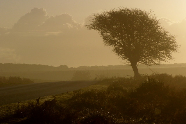Lone tree by the B3078 road, Deadman Hill