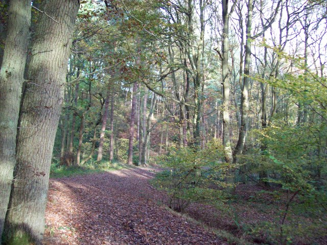 Autumnal splendour in Smeekley Wood