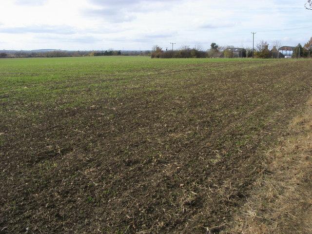 Footpath across the field