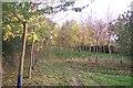 TQ7975 : New woodland on Saxon Shore Way by David Anstiss