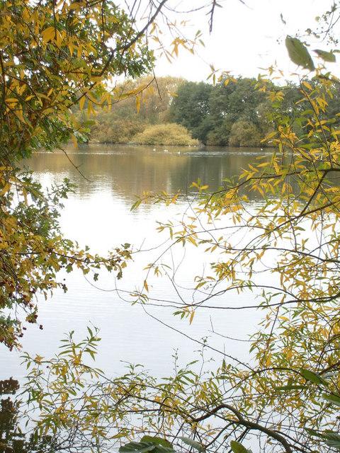 Lady's Pond, near Navestock Heath