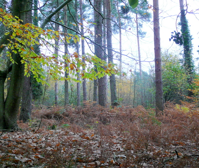 Autumnal forest floor jonathan billinger geograph for Forest floor definition
