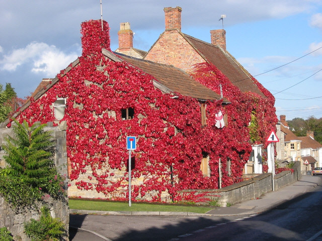 Vine covered houses, Curry Rivel