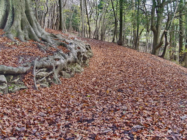 Footpath in Arnside Knott Woods