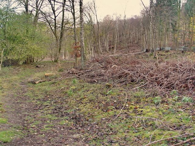 Middlebarrow Wood
