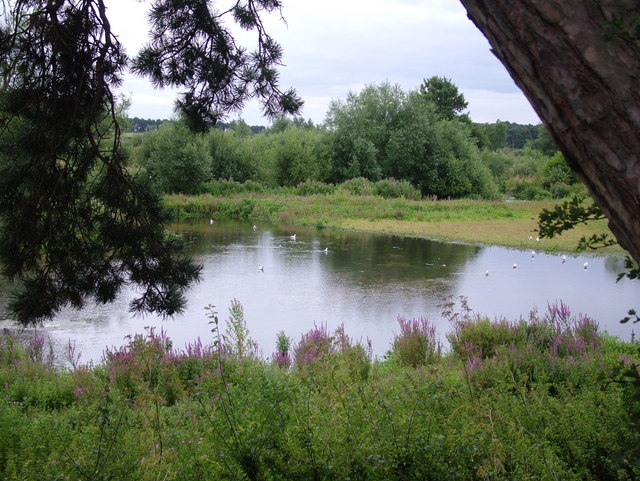 Pond by Barnham Common