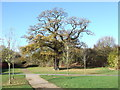 SP6949 : Old Oak Tree, Towcester by Oliver Hunter