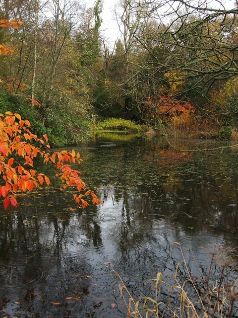 Pond in Kilmahew Estate