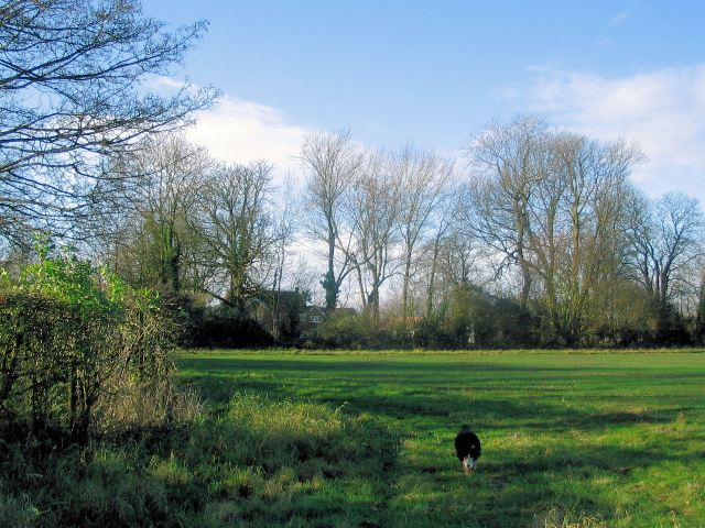 A recently planted field bordering on Drayton Beauchamp Lane
