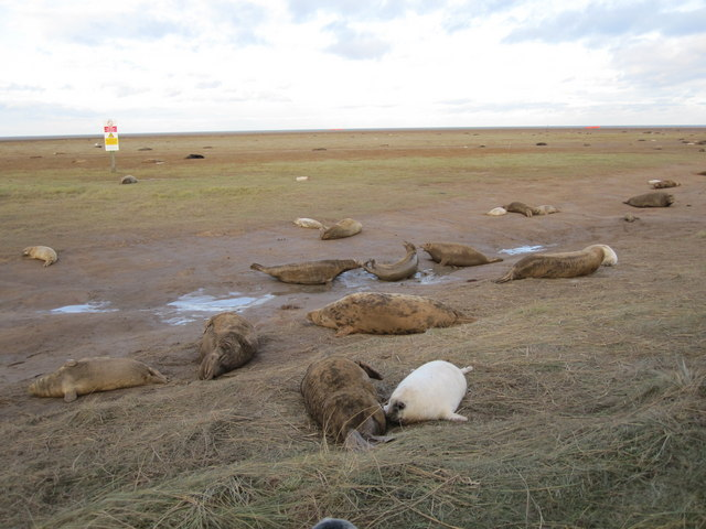 Tempers fray at Donna Nook
