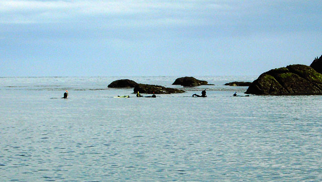 Swimming with Seals, Eastern Isles, Scilly