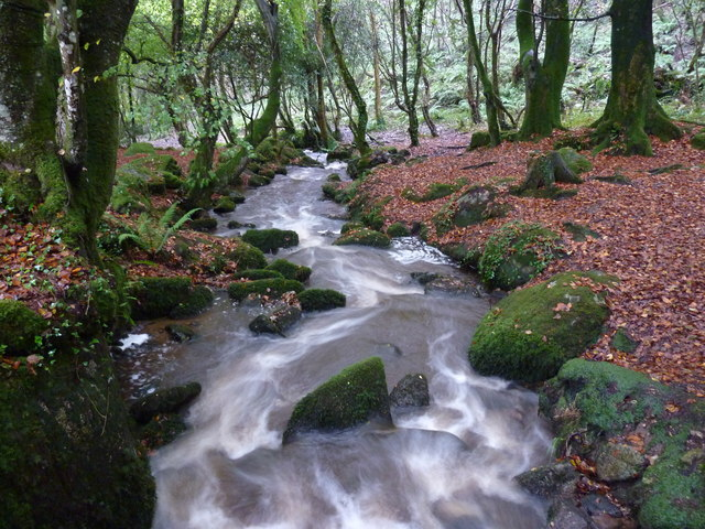 Stream in Bosahan Woods