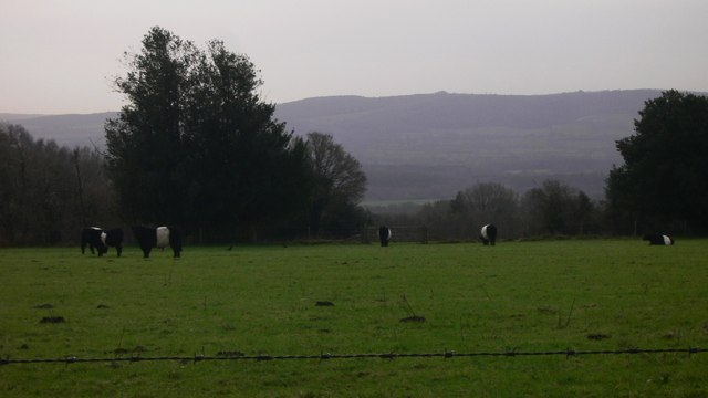 Belties on Woolbeding Common