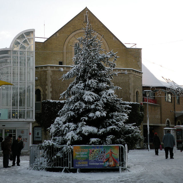 Christmas Tree Snow Pictures