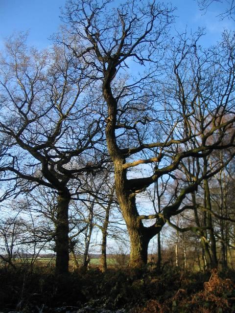 Crackley Wood