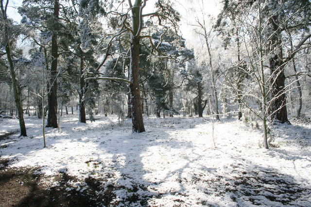 April snow in Bunkers Hill Wood