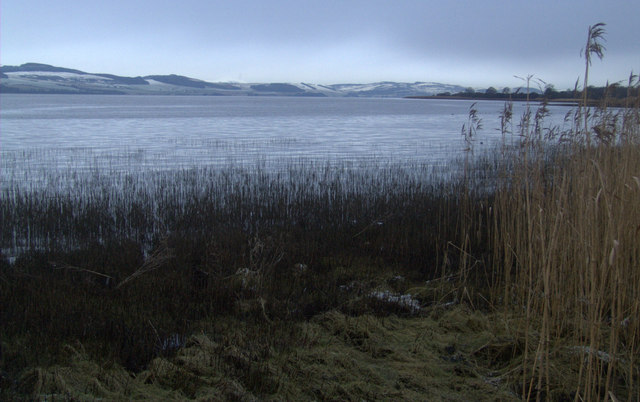 Reeds on the Tay at Kingoodie