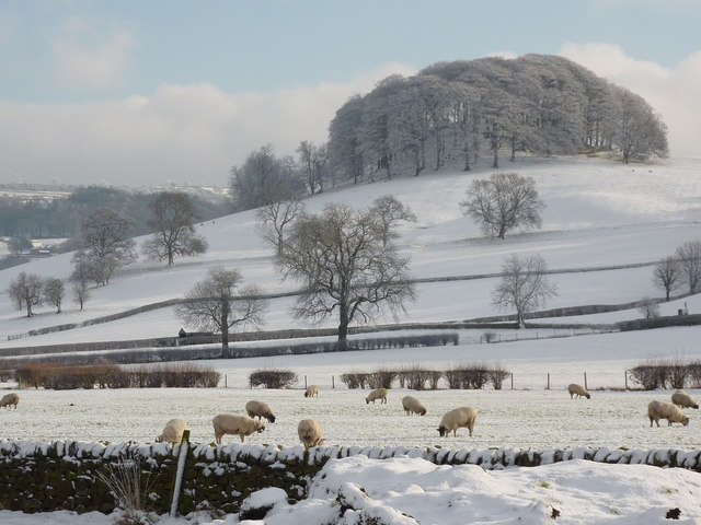 Sheep grazing below Peak Tor