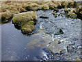 SN8078 : Stepping stones over the Nant Rhuddnant by Nigel Brown