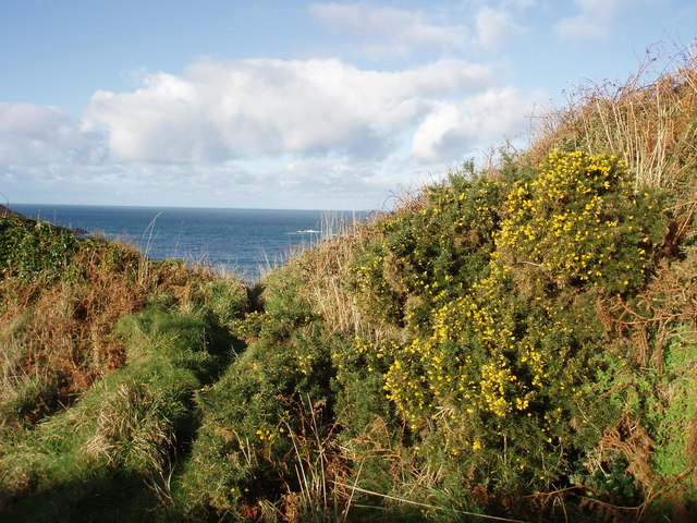 Gorse above Portheras Cove