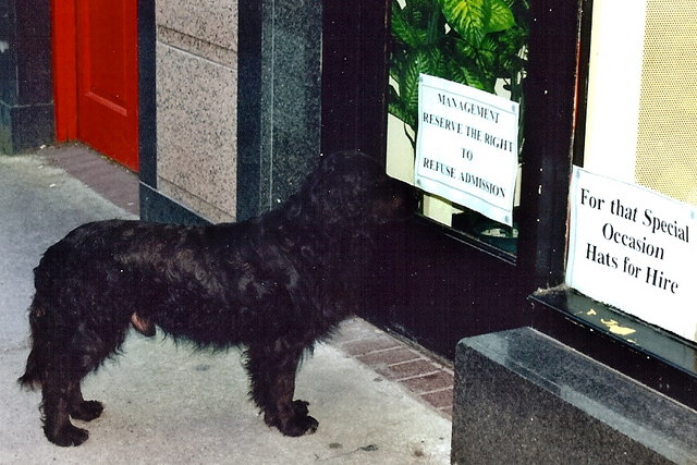 Tralee Ireland Dog Show