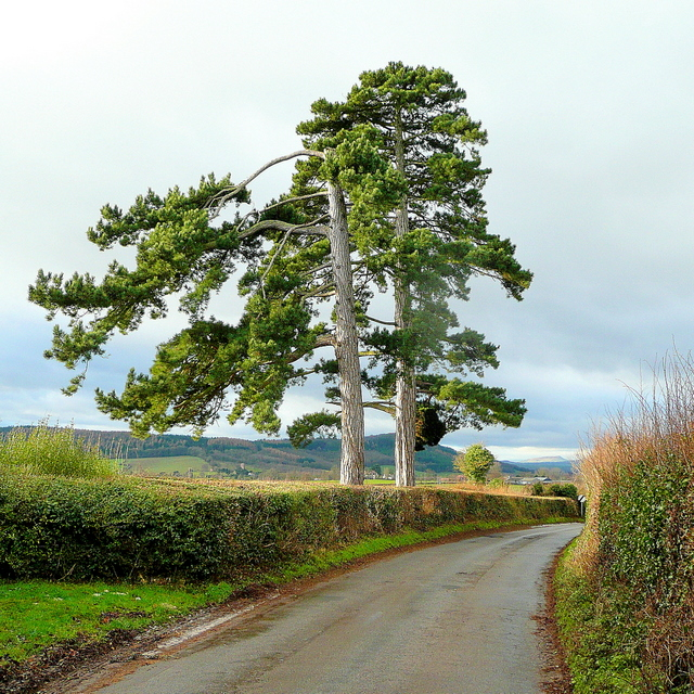 Bromsash Pines 2