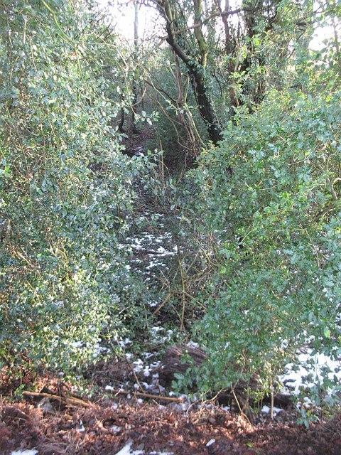 Gathurst Wood