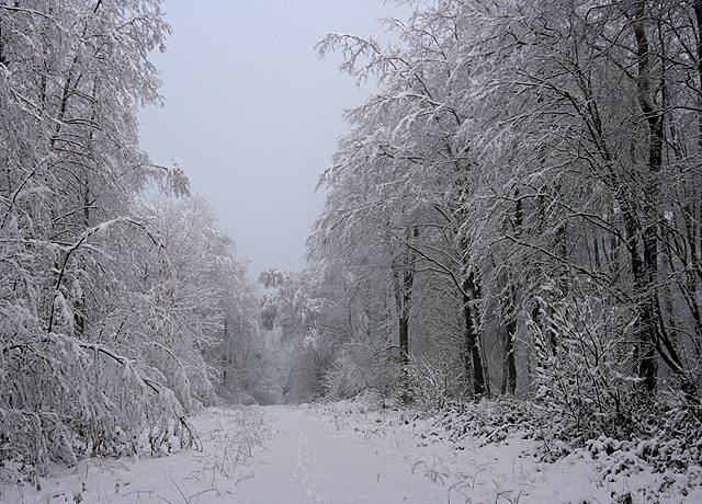 Narnia comes to Weston Common