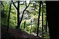 SD7715 : Redisher Woods by Bill Boaden