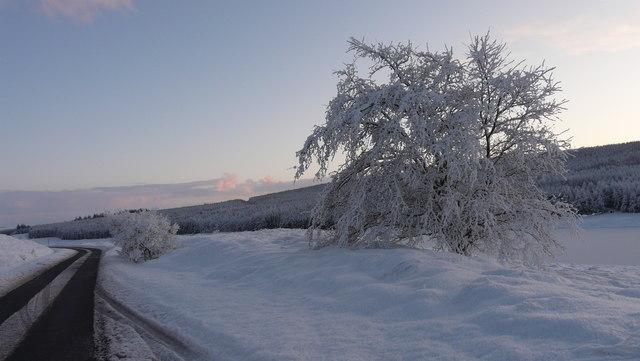 Winter Scene by Loch Craggie