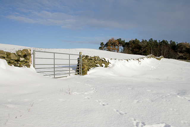 A gate and drystane dyke on Mount Skep