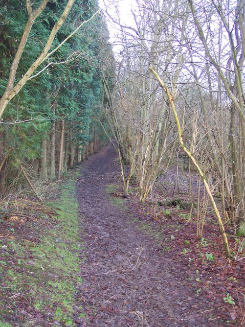 Bridleway enters Badlesmere Park Wood