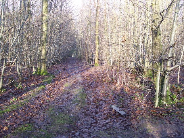 Access track in Badlesmere Park Wood