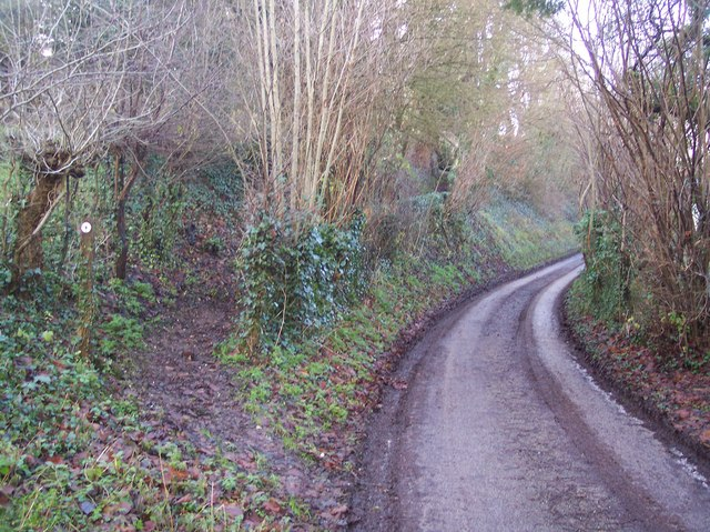 The North Downs Way heading towards Chilham Church
