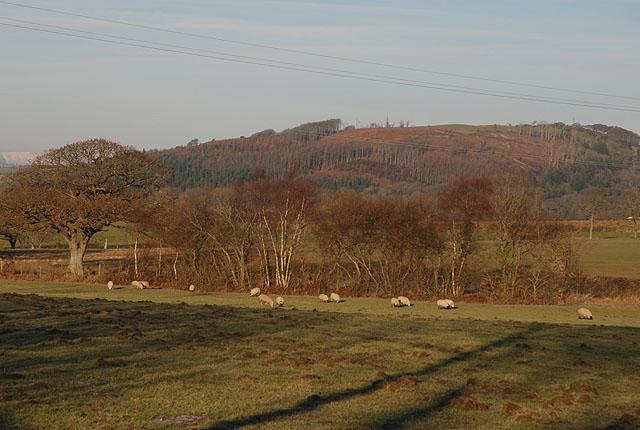 Grazing land by Cefn Vaenor Fawr farm
