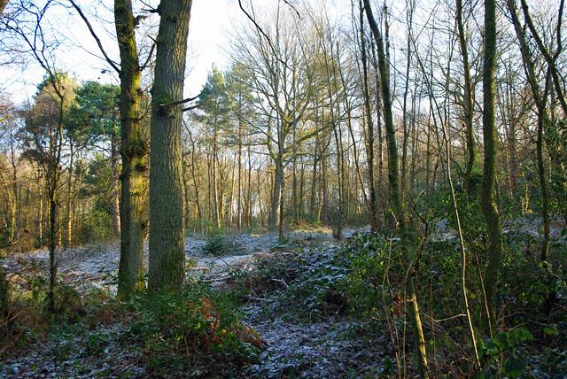 St Leonards Forest
