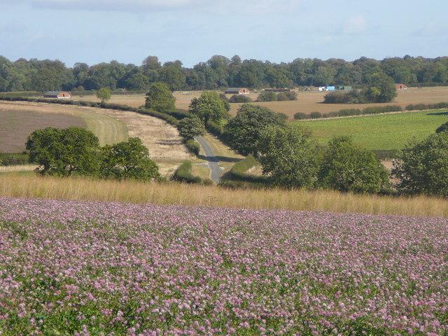 Clover field east of Marwicks Wood