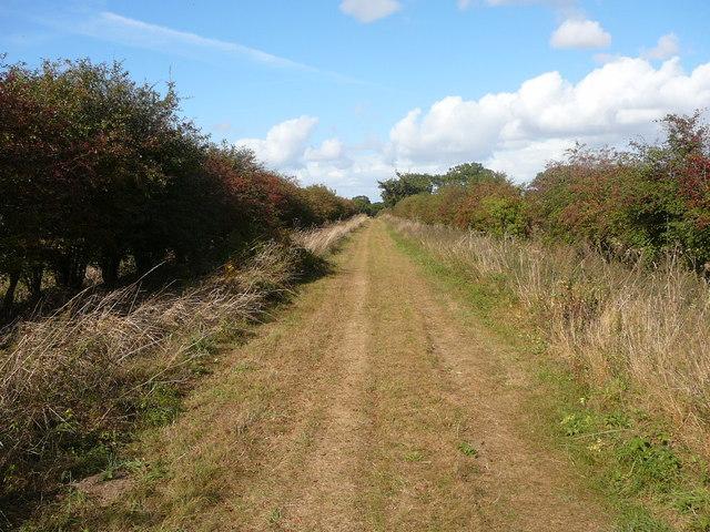 Peddars Way near Harpley Common