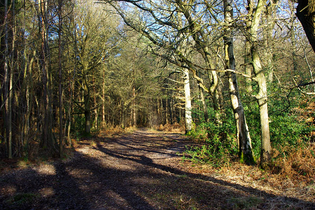 St Leonards Forest path
