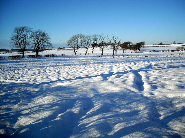Snowy Fields Near Lindsayfield