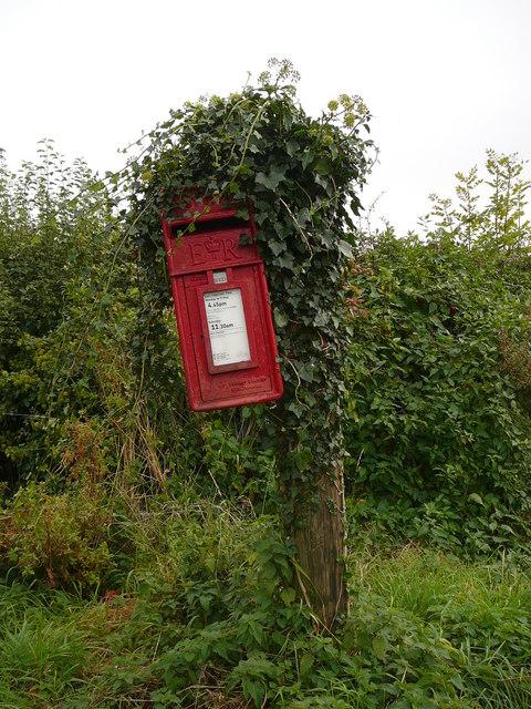 Ivy clad post box at Stone Road End Farm