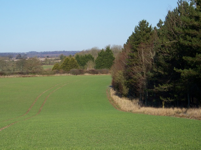 Arable field near Thickthorn Wood