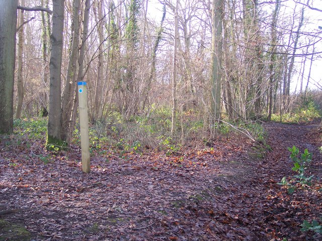 Bridleway and track junction in Denge Wood