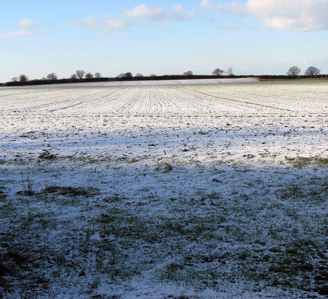 Wintry field west of New Road