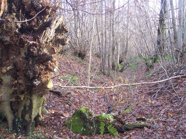 Denge Wood earthwork ditch