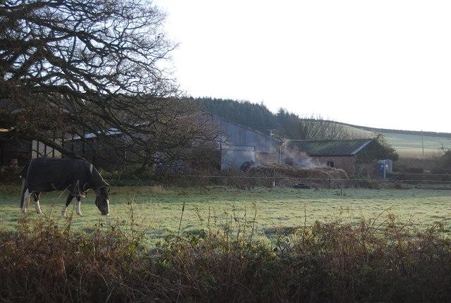 Abbey Mill Farm & a horse