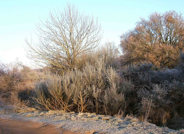 A frosty morning on Hartlebury Common