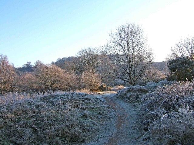 Hartlebury Common - a frosty January morning
