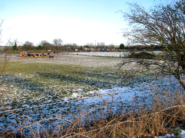 A frosty cattle pasture east of New Road