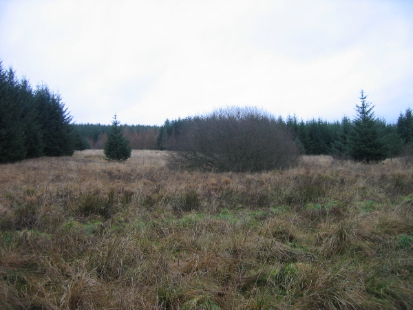 Clearing in Pundershaw Forest
